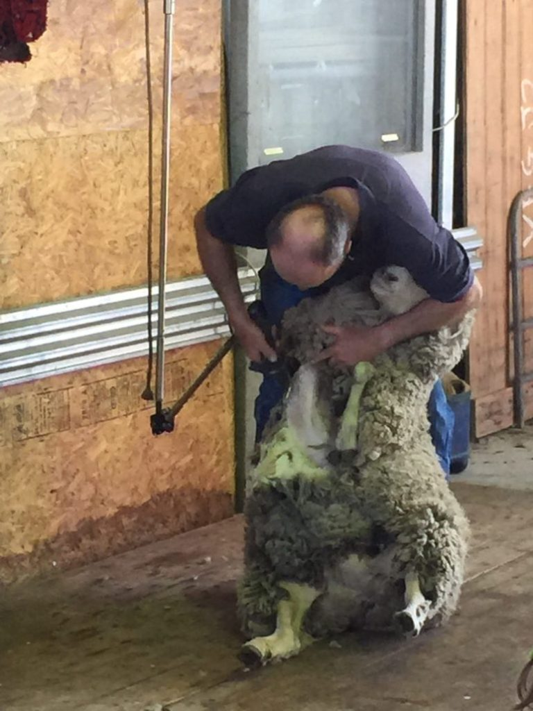 Shearing Display